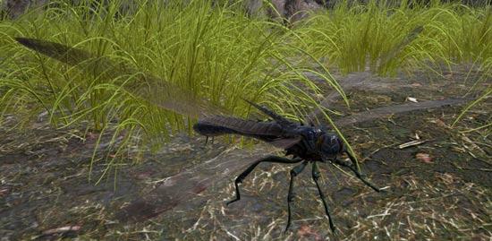 方舟生存进化巨脉蜻蜓分布位置